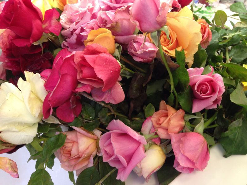 Janes roses